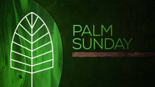 March of the Palms